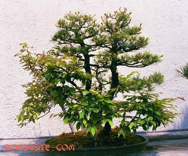 [تصویر:  forest1b.jpg]