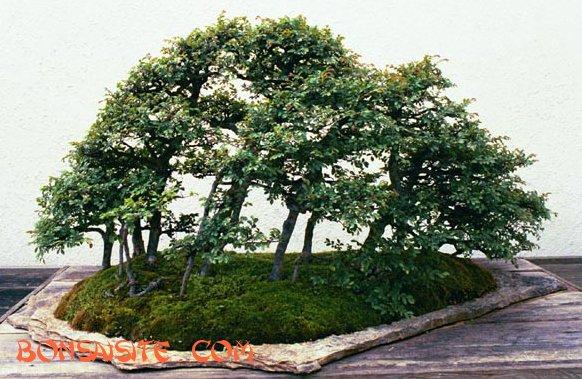 [تصویر:  forest2b.jpg]