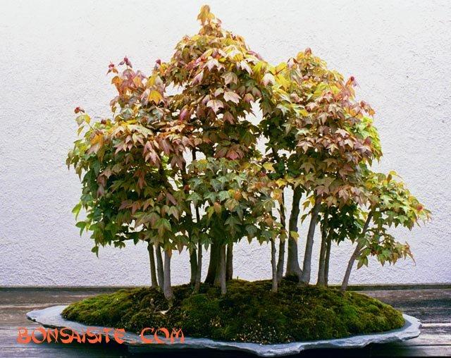 [تصویر:  forest4b.jpg]