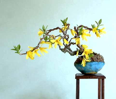 [تصویر:  minigoldenbellflower11cm.jpg]